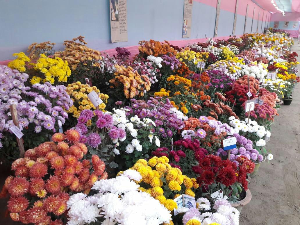 flower fain in raiganj
