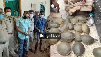 three bagfuls tortoises seized by rpf in maldah town station