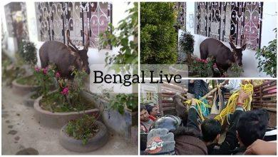 wild life in north bengal