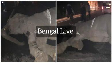 wildlife in north bengal