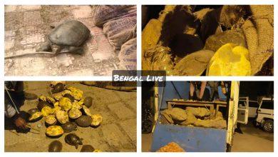 tortoises recovered in raiganj